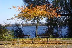 Alster Herbstbaum 01
