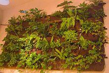 Budapest02 Pflanzentaschen